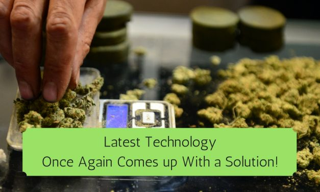 Vendor App For Marijuana Dispensaries